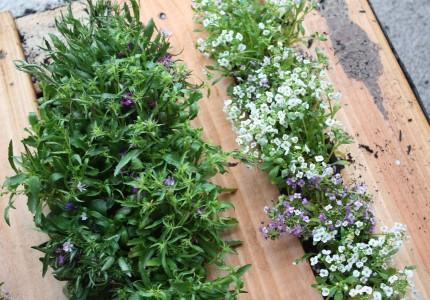 вертикальное озеленение сада