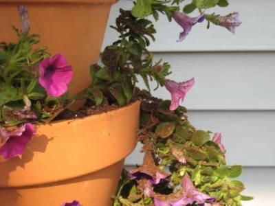 Каскадный горшок - Оригинальный цветник перед домом. Мастер-класс.
