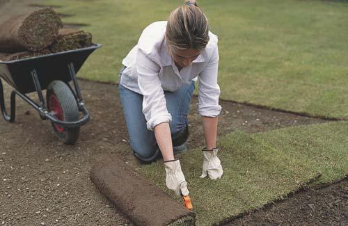 Как посадить газон