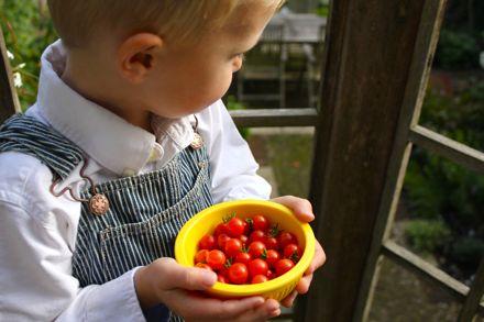 Методы выращивания помидор