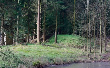 Вечно зеленый лес