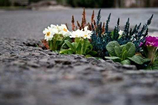 Идеи цветников