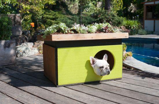 Шикарные идеи конуры для собаки