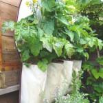 Сад на стене - зеленые стены (4)