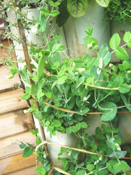 Сад на стене - зеленые стены (3)