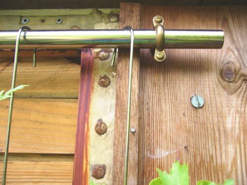 Сад на стене - зеленые стены (2)