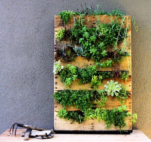 Зимний сад в квартире - вертикальный сад (13)