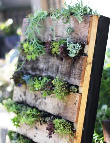 Зимний сад в квартире - вертикальный сад (3)