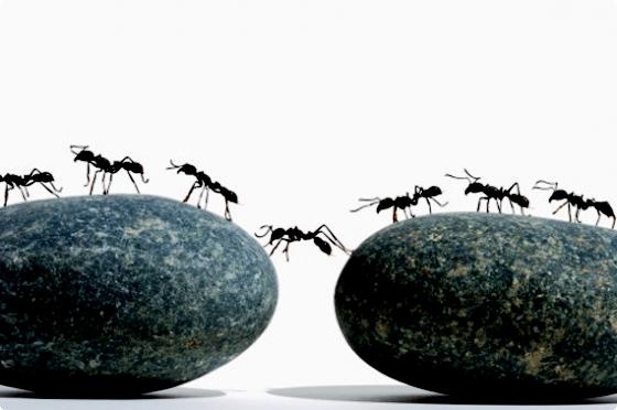 методы борьбы с паразитами в организме человека
