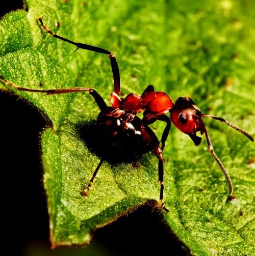 Методы борьбы с муравьями - как вывести муравьев (4)