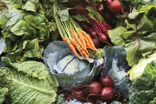 Овощи на даче - огород на даче (3)