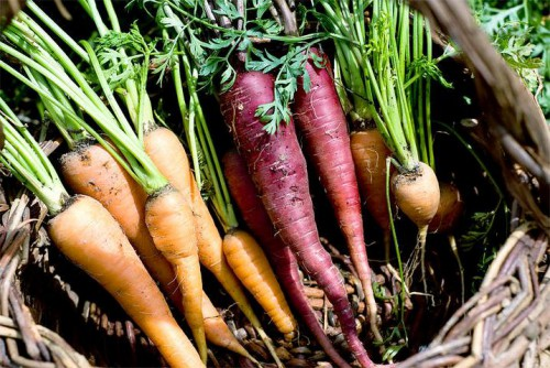 Уход за морковью (11)