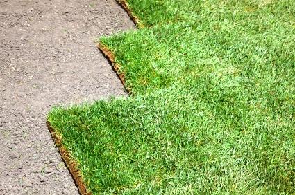 Как выращивать газонную траву (5)