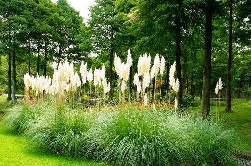 Дизайн садового участка - приусадебный участок своими руками (15)