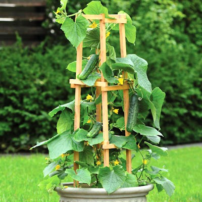 Как вырастить огурцы - польза огурцов (1)