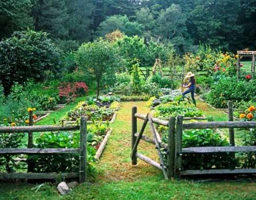 for Laying out your vegetable garden