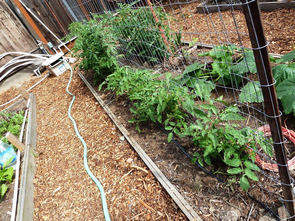 Сайт садовый мир украшаем сад своими руками фото 94