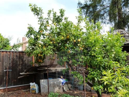Украшение садового участка своими руками - оформление дачи своими руками (12)