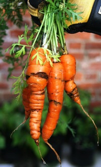 Уход за морковью (6)