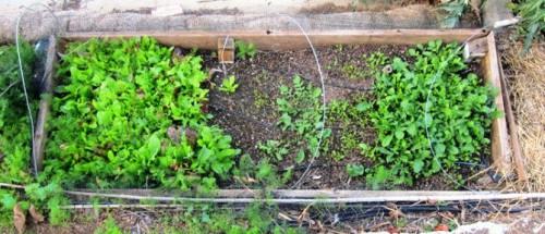Фасадная стеклотканевая сетка - средства для защиты растений (3)