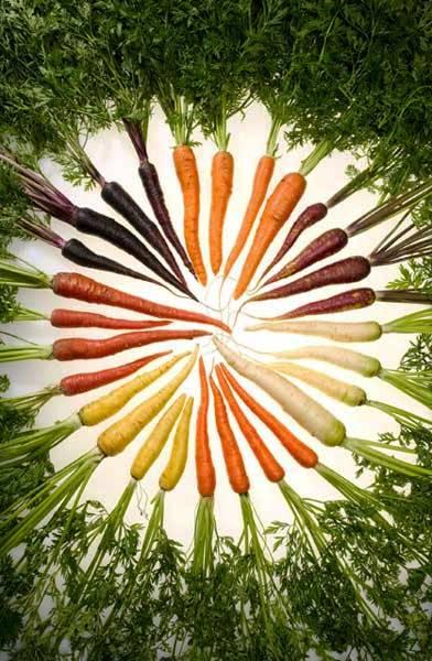 Чем полезна морковь- лучшие сорта моркови - выращивание моркови (6)