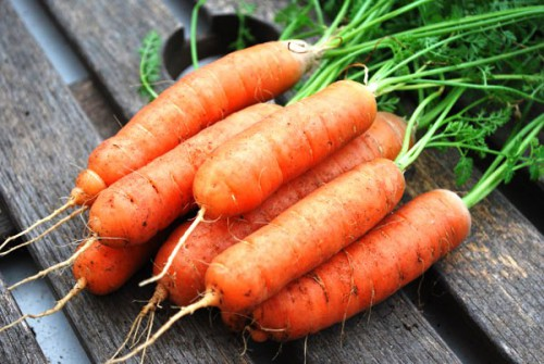Чем полезна морковь- лучшие сорта моркови - выращивание моркови (7)