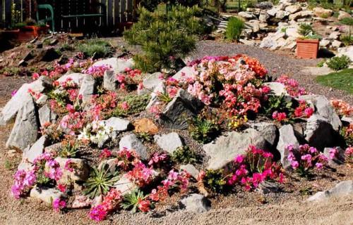 Альпинарий фото - растения для альпинария (10)