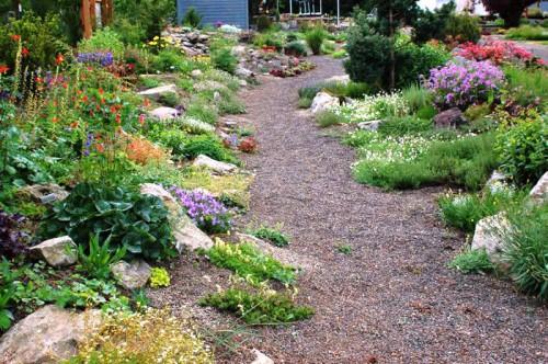 Альпинарий фото - растения для альпинария (12)