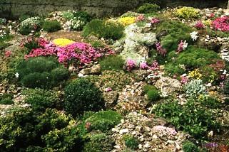 Альпинарий фото - растения для альпинария (15)