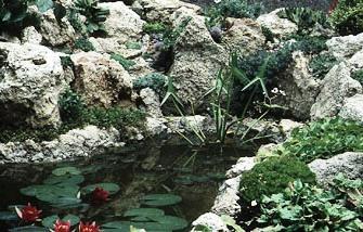 Альпинарий фото - растения для альпинария (16)