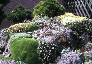 Альпинарий фото - растения для альпинария (17)