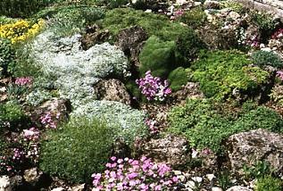 Альпинарий фото - растения для альпинария (18)
