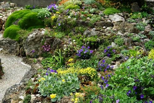 Альпинарий фото - растения для альпинария (20)