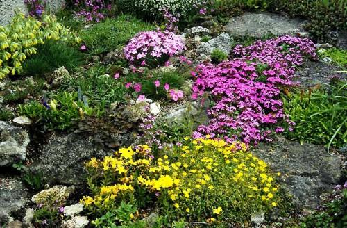 Альпинарий фото - растения для альпинария (21)