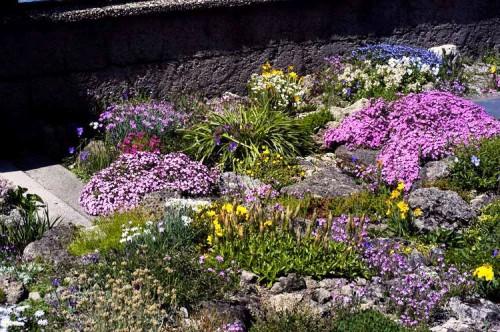 Альпинарий фото - растения для альпинария (23)