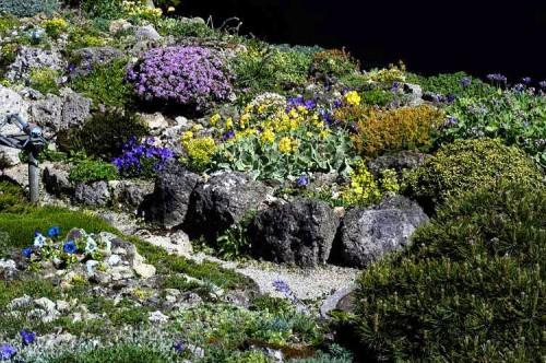 Альпинарий фото - растения для альпинария (25)