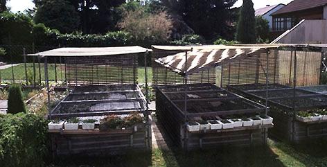 Альпинарий фото - растения для альпинария (32)