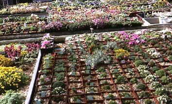 Альпинарий фото - растения для альпинария (34)