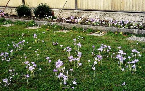 Альпинарий фото - растения для альпинария (44)