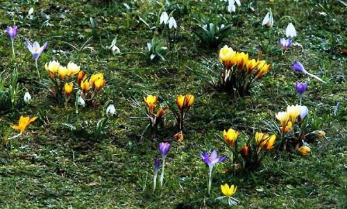 Альпинарий фото - растения для альпинария (46)