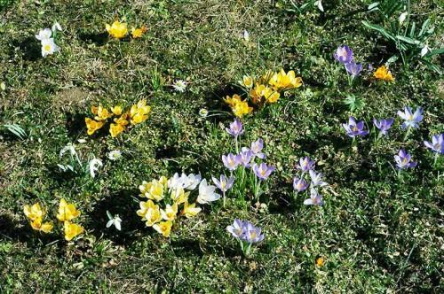 Альпинарий фото - растения для альпинария (47)