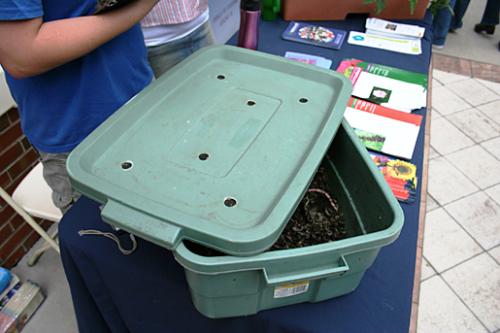 Биогумус - размножение червей (3)