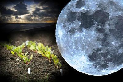Луна и растения (4)