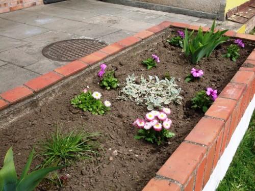Рабатка - фото цветников (19)