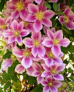 вьющиеся цветы (1)