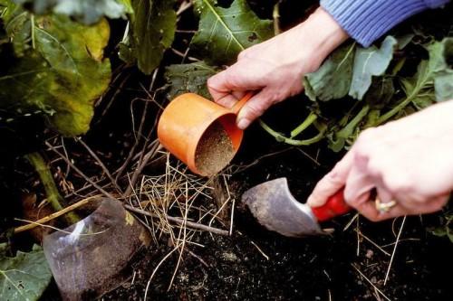 Удобрения для огорода - зола как удобрение (1)