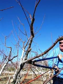 Чем белят деревья - побелка для деревьев (2)