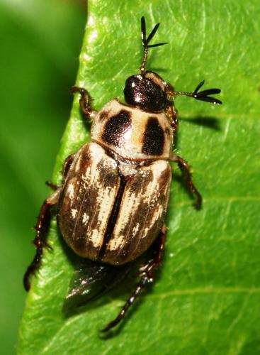 Борьба с майским жуком - борьба с личинкой майского жука (5)