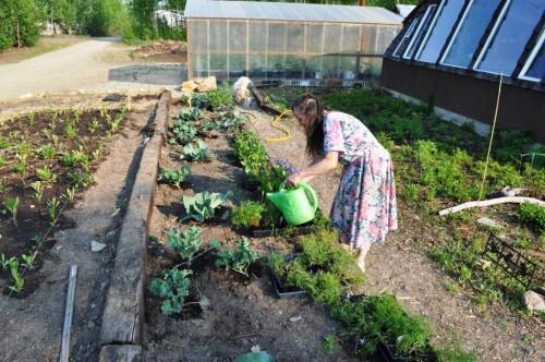 Выращивание овощей в теплицах - как вырастить капусту и помидоры (7)