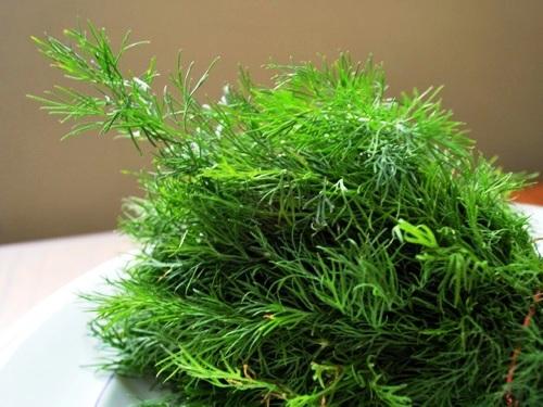 Выращивание укропа - польза укропа (3)